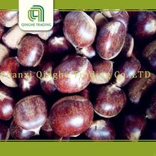 Brand new wholesale fresh chestnut with high quality 2015 price organic grade a peeled cooked frozen chestnut for sale