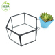 ** decor small Clear glass flower pot container // Custom hand painted flower pot // geometric mini glass flower pots wholesale