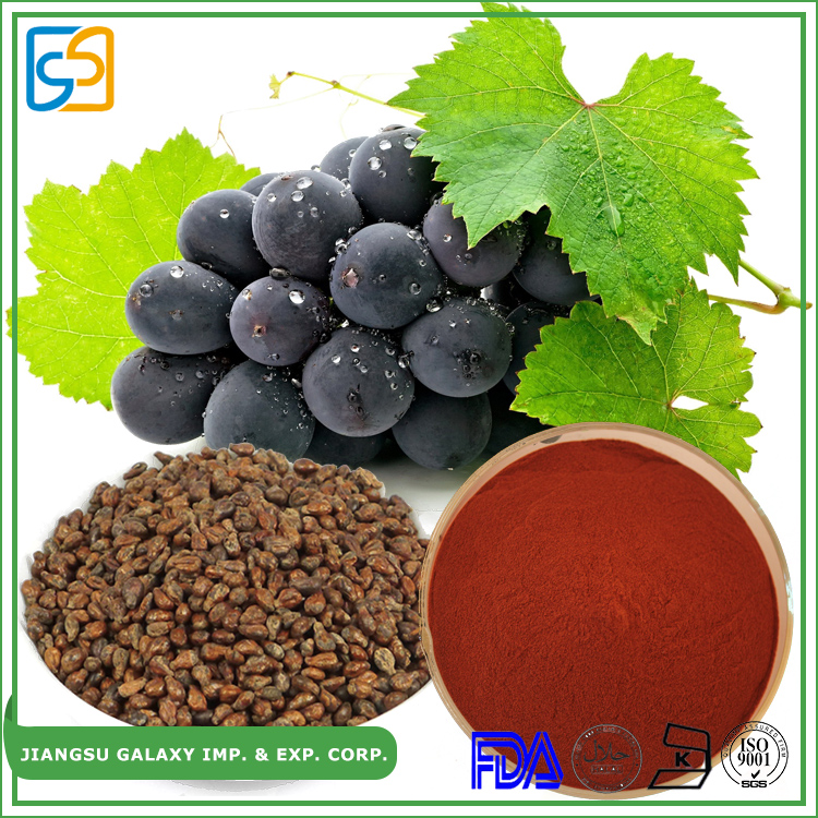 GMP factory polyphenol extract opc grape seeds p.e. powder standard proanthocyanidin