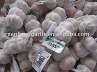 China garlic 2013 new crop