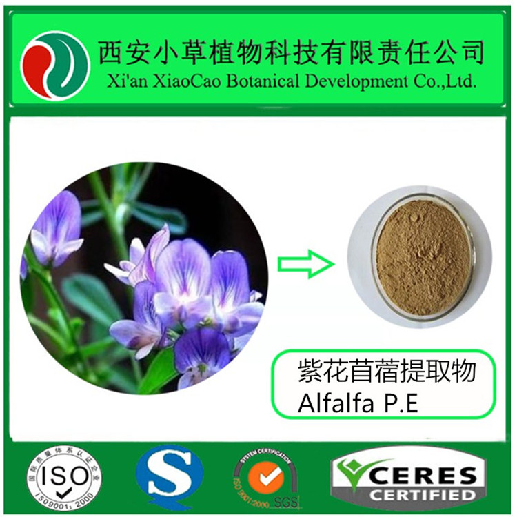 Organic Medicago sativa L. extract powder,Alfalfa P.E,Medicago sativa L. for food grade