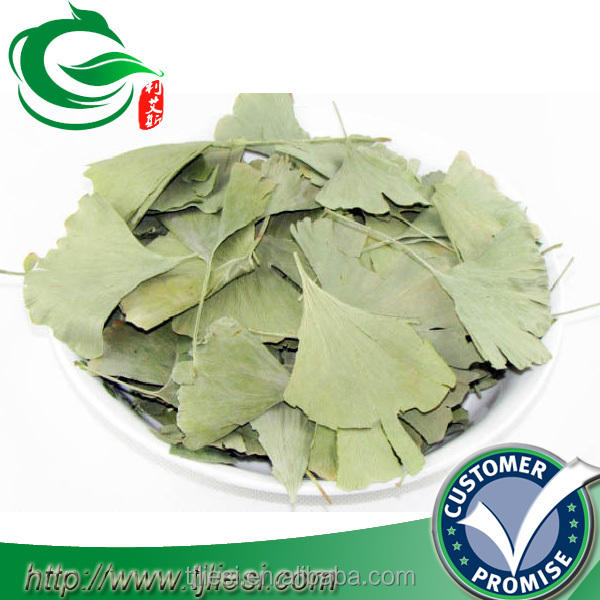 supply raw herbs ginkgo biloba leaves
