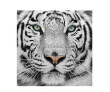 Wall art canvas print animal white tiger 30x30cm