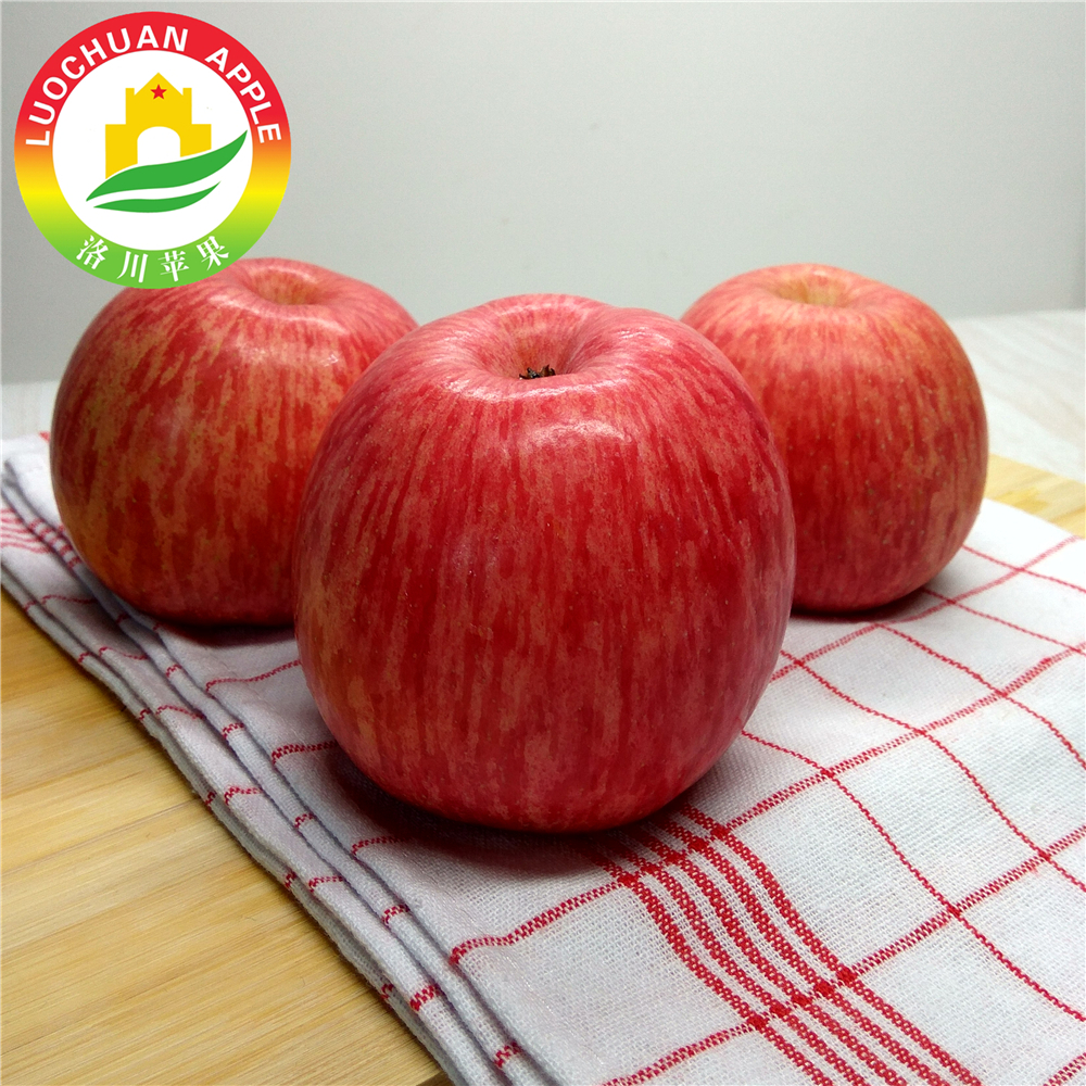 High quality LUOCHUAN sweet Fuji apples lights big red apple