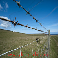 12x14 Gauge/ 14x14 Gauge High Quality Cheap Barbed Wire Farm Fencing