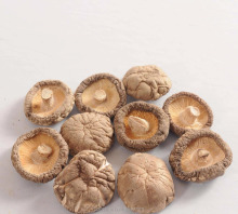 Cultivated High Quality Shiitake Mushroom