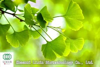 GMP/FDA food quality assurance ginkgo biloba extract flavone glycosides 24%, terpene lactones 6%