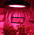 High quality Hydroponic 600wled plant grow light ,grow light for fruit and vegetables