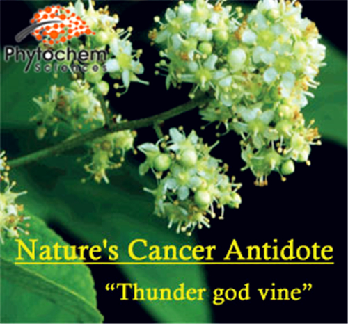 Herbs Extract Thunder God Vine Extract with 99% Celastrol