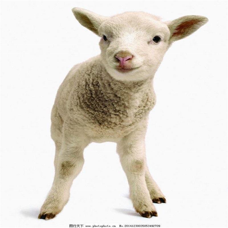 Good Design Sheep Goat Slaughterhouse Buy Slaughterhouse Equipment