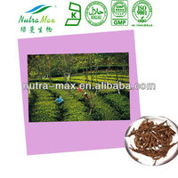Black Tea Extract 40% Theaflavine
