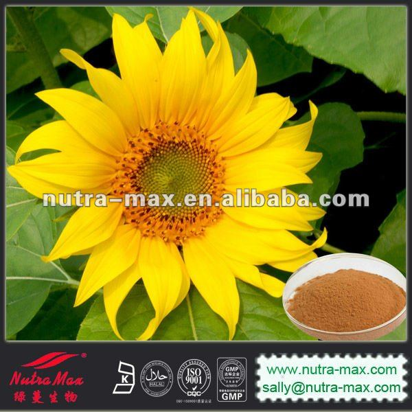 Water-solubl Sunflower Seed Extract 4:1,5:1,10:1