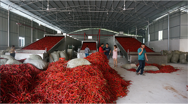 Hot air chili dryer chili pepper dryer