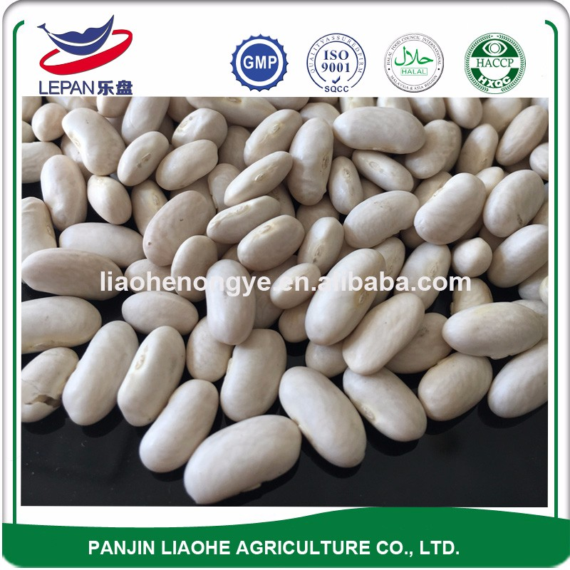 New Crop Spanish Type Baishake White Kidney Beans