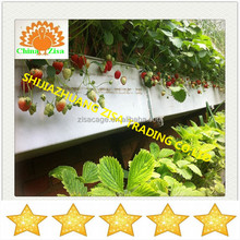 strawberry vertical nft hydroponic system