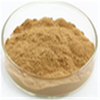 Natural herbal supplement Acmella oleracea Extract