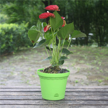 2015 new products, large virgin pp Home garden, smart pot gardening