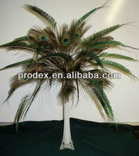 Peacock feathers for centerpiece decoration