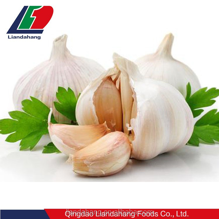 GAP Pure & Normal White Garlic in New Season for UAE