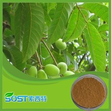 Hot Selling High Quality Organic olive leaf extract in bulk
