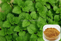 100% natural organic high-end stinging nettle extract powder