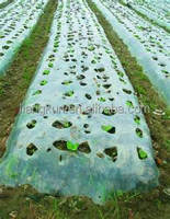 agriculture mulch pe film for agriculture/recycling ldpe film