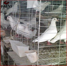 Wholesale Poultry Battery Cage For Nigerian Farm/Best Quality Plastic Pigeon Basket Pigoen Cage