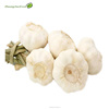 /product-detail/2019-new-crop-natural-normal-white-fresh-garlic-60592531287.html