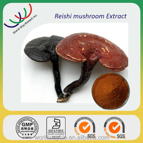 Chinese herb medicine 100% natural ganoderma lucidum extract, reishi mushroom lingzhi extract
