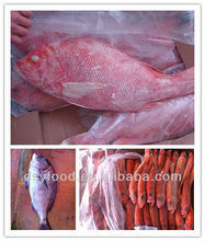 red fish frozen red snapper