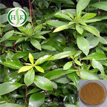 Natural Herbal Senna Leaf Extract