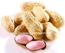 New Crop Good Quality Shandong Raw Peanuts In Shell for sale
