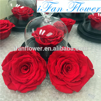 Romantic Birthday Gifts For Girl Best Trading Business Preserving Roses Flowers