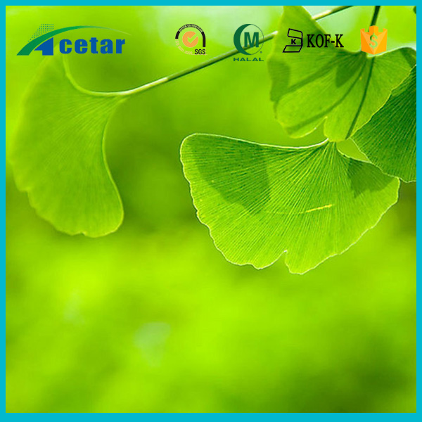 Hot selling New Pricing Natural Standardized 24 6 extract of ginkgo biloba