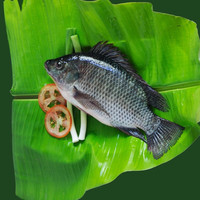 Frozen Style and BQF Freezing Process frozen tilapia fish