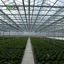 Large Low cost hot galvanized frame agricultural commercial project light deprivation glass greenhouse for sale