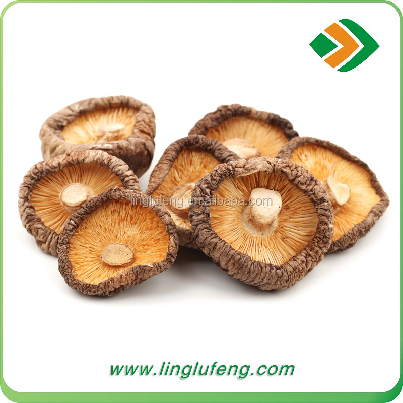 Anti-cancer Shiitake Mushroom China Wholesale Shiitake Mushroom Cultivation Log Spawn Substrate