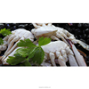 Wholesale good quality frozen half cut blue crab in stock