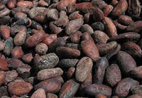 Furmentation Cocoa Beans - Hight quality (CB5)