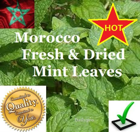 Morocco Fresh & dried Mint Leaves