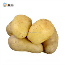 China large farm planting reasonable cheap price potato exporters in Shandong province
