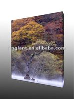 Super cheap tree prints black and white photographs