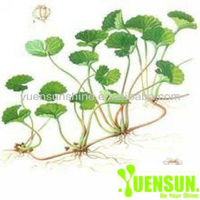 100% water soluble Gotu Kola Extract
