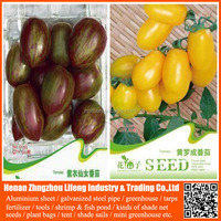 hybrid tomato seeds israel for sale