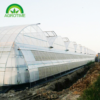 High quality tomato agricultural greenhouse