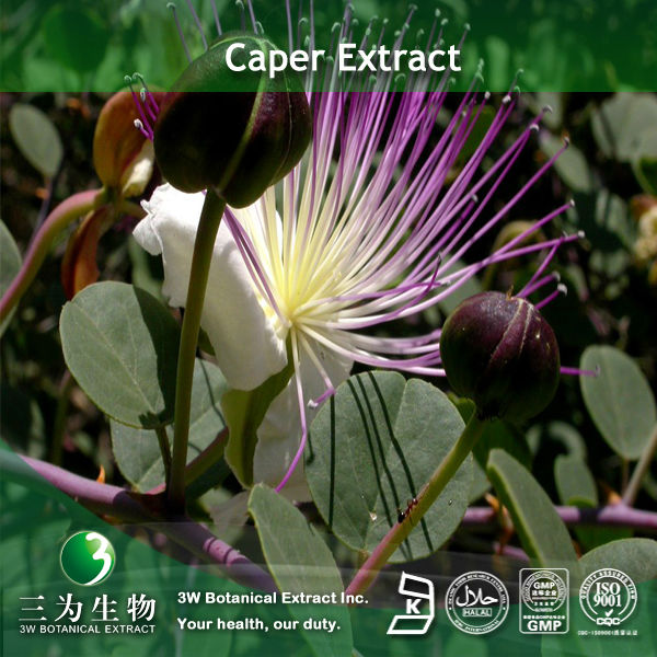 Capparis Spinosa Extract polyphenol in hot selling