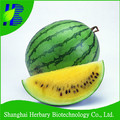 2017 Hot sale yellow watermelon seed for sowing
