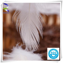 2-4cm alibaba china wholesale washed white duck feathers for sofa pillow core mattress