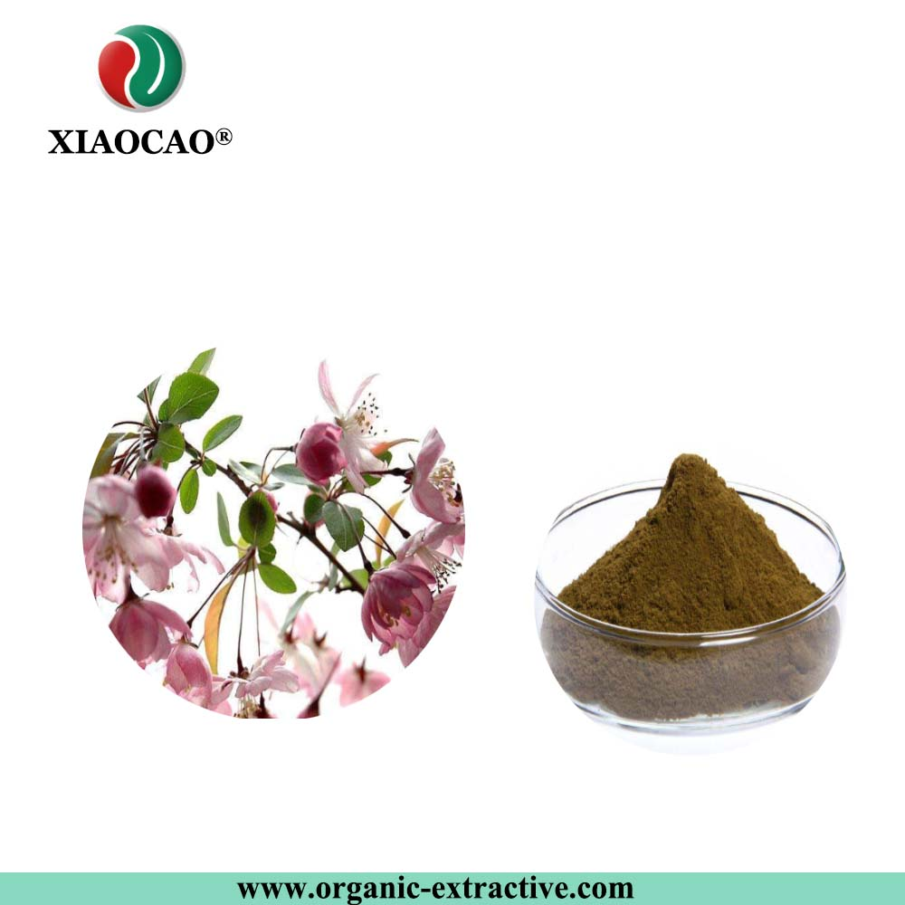 Total Flavonoid 3%-70% Dogbane Leaf Extract/kender extract Quercetin