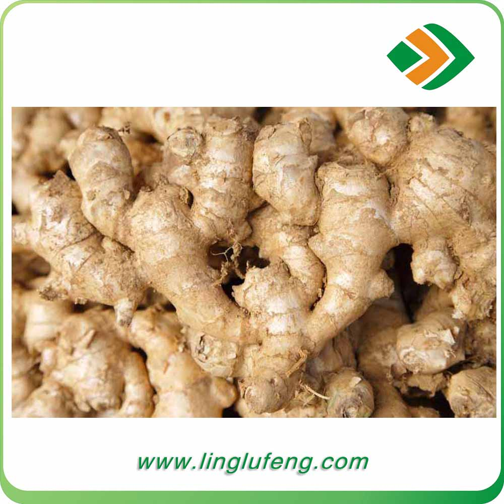 excellent New crop price of organic fresh ginger